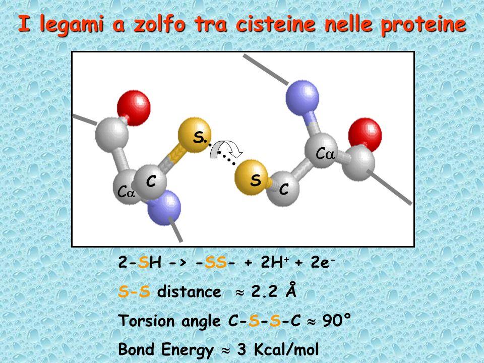 I legami a zolfo tra cisteine nelle proteine