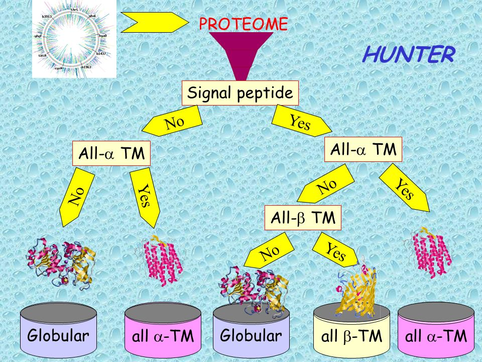 HUNTER PROTEOME Signal peptide No Yes All-a TM All-a TM No Globular