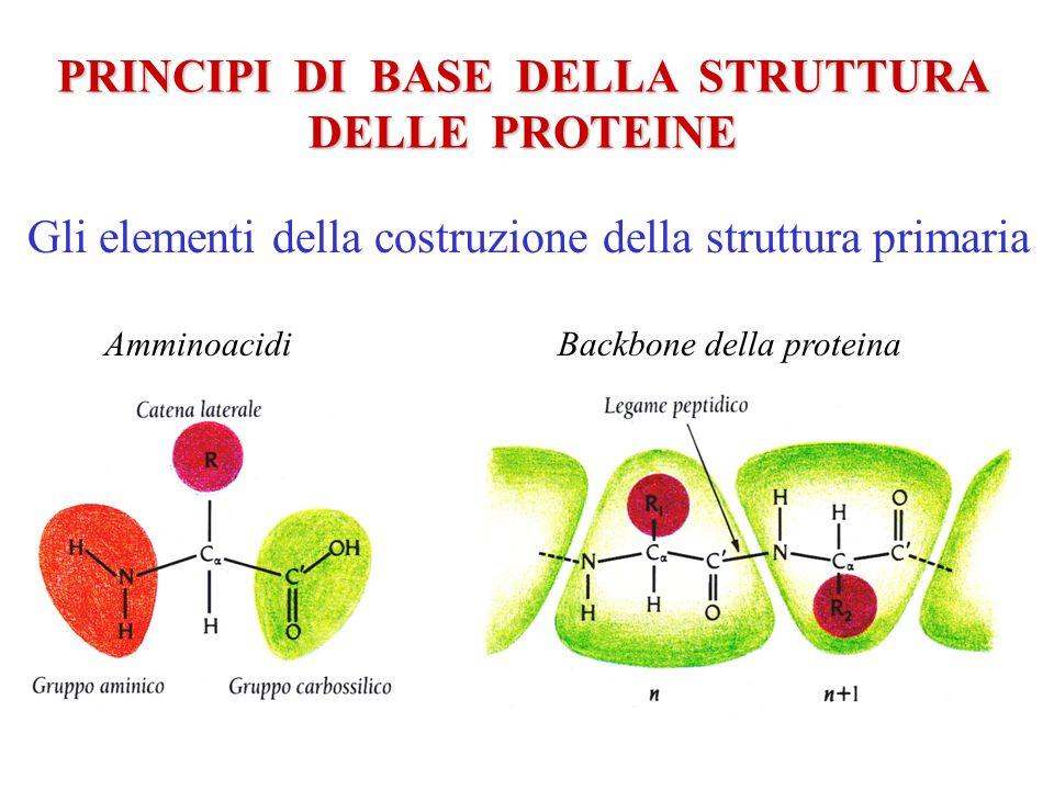 PRINCIPI DI BASE DELLA STRUTTURA DELLE PROTEINE