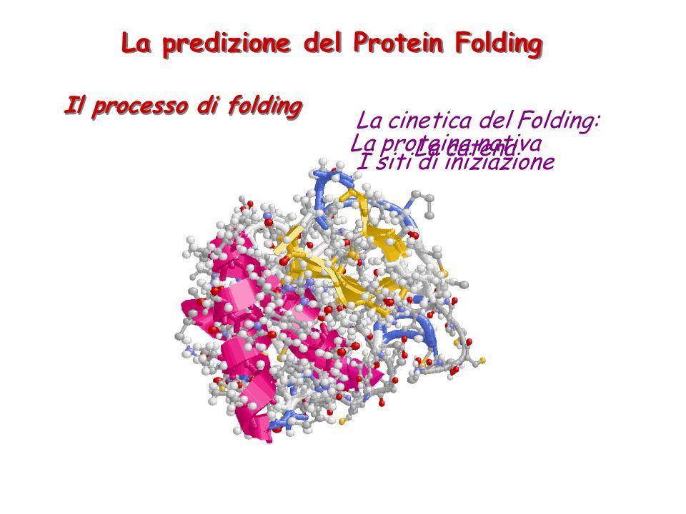 La predizione del Protein Folding