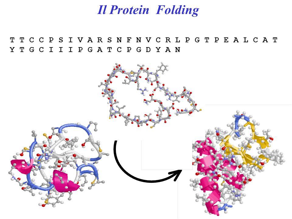 Il Protein Folding T T C C P S I V A R S N F N V C R L P G T P E A L C A T Y T G C I I I P G A T C P G D Y A N.