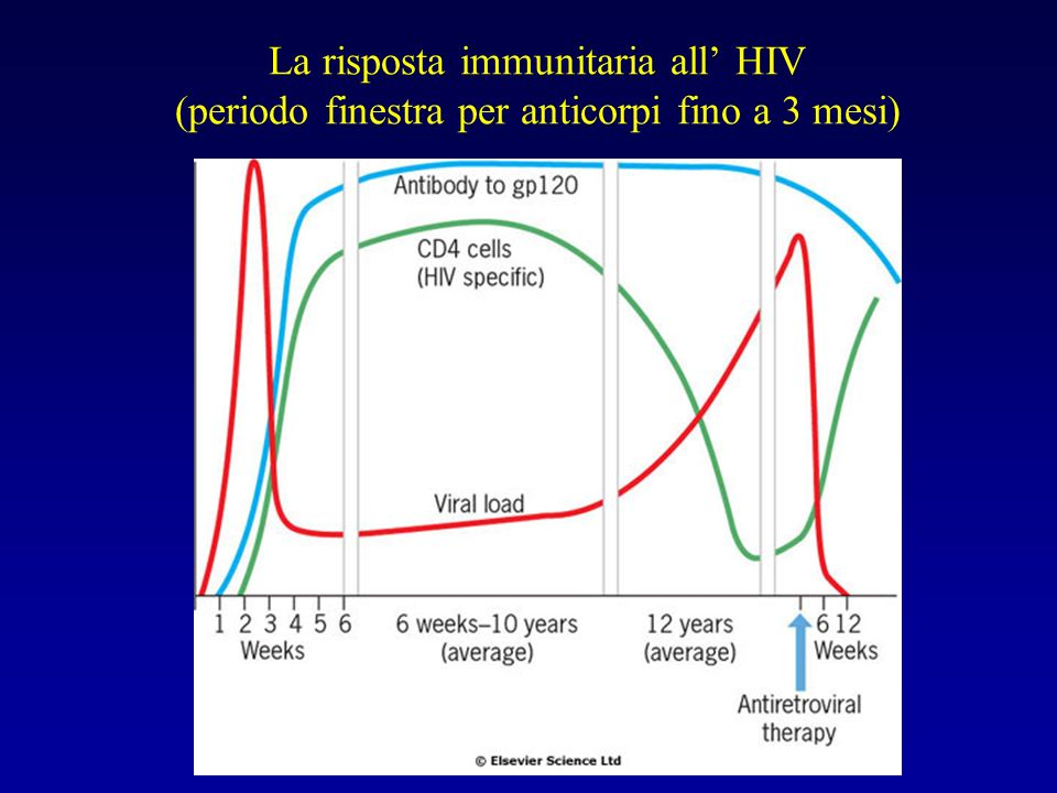 La risposta immunitaria all' HIV (periodo finestra per anticorpi fino a 3 mesi)