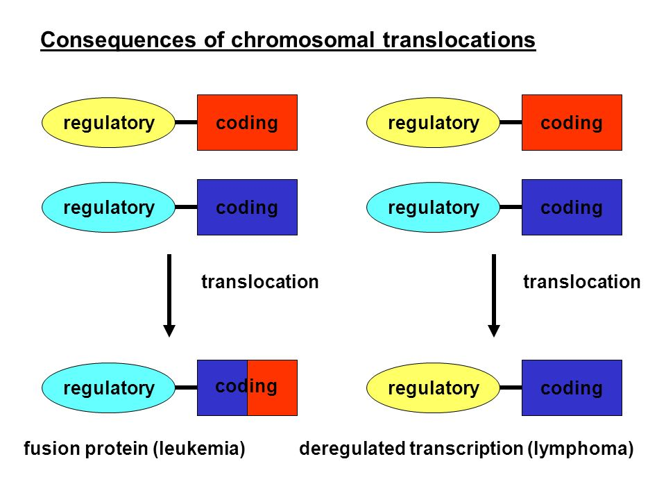 Consequences of chromosomal translocations
