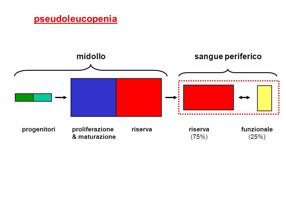 pseudoleucopenia midollo sangue periferico proliferazione