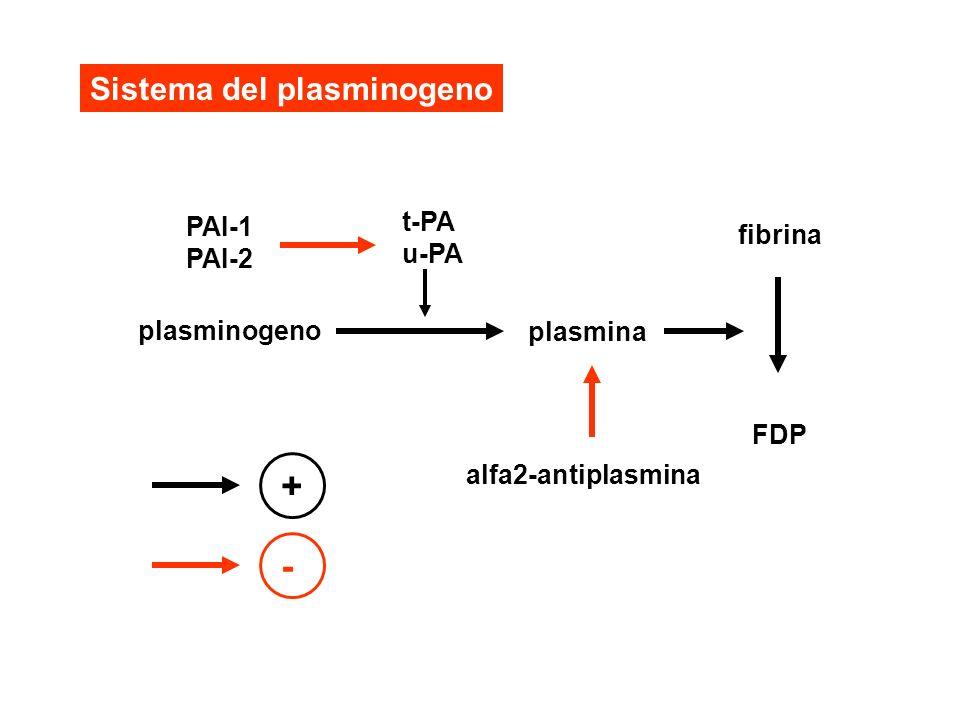 + - Sistema del plasminogeno PAI-1 PAI-2 t-PA u-PA fibrina