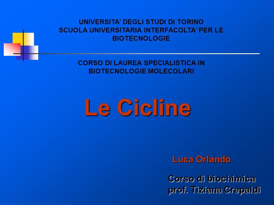 Le Cicline Luca Orlando Corso di biochimica prof. Tiziana Crepaldi