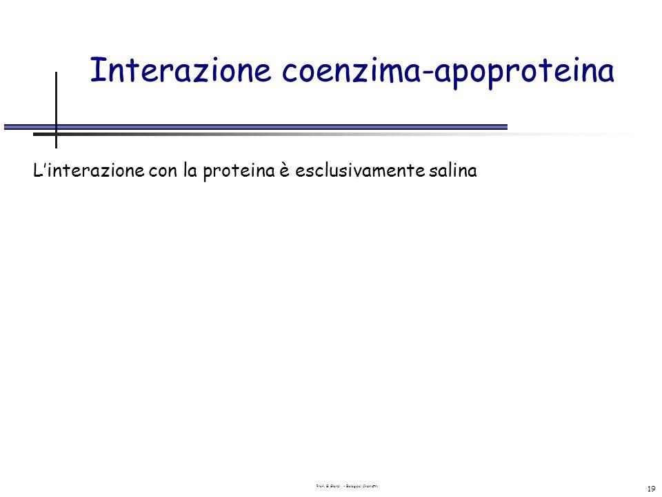 Interazione coenzima-apoproteina