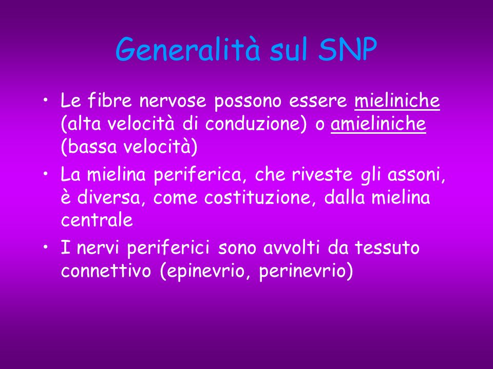 Generalità sul SNP Le fibre nervose possono essere mieliniche (alta velocità di conduzione) o amieliniche (bassa velocità)