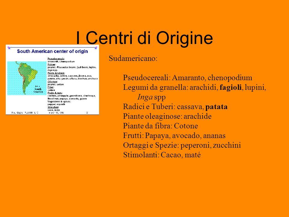 I Centri di Origine Sudamericano: Pseudocereali: Amaranto, chenopodium