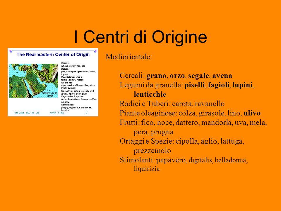 I Centri di Origine Mediorientale: Cereali: grano, orzo, segale, avena
