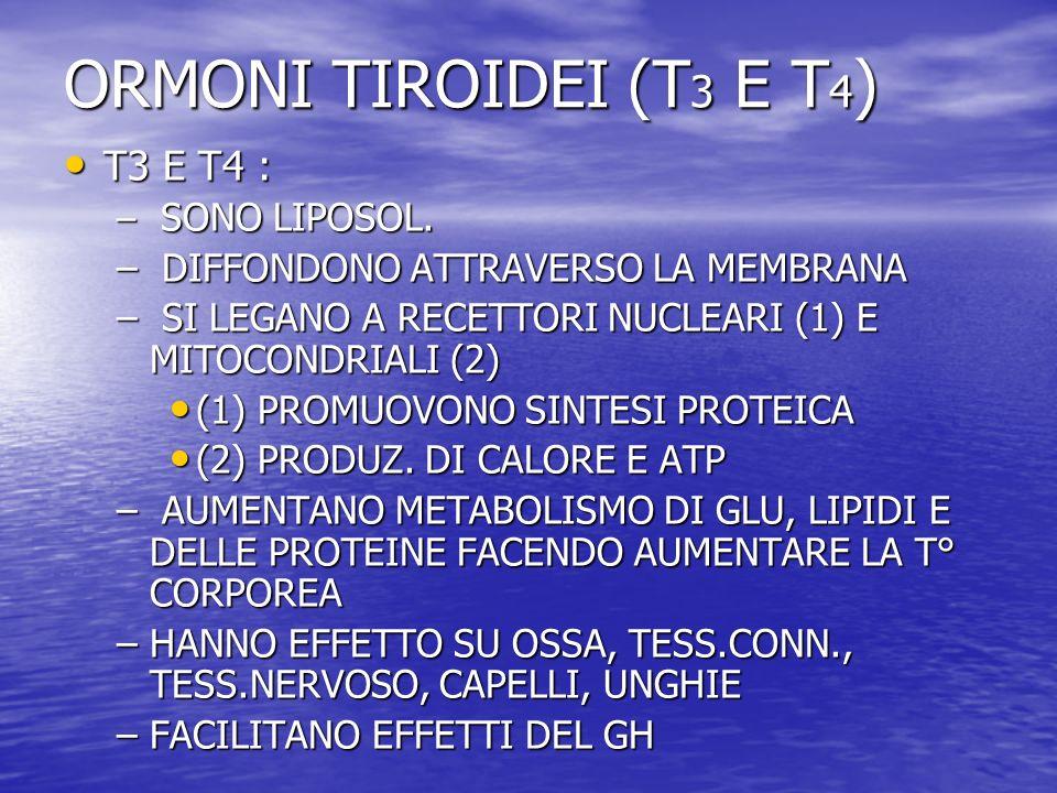 ORMONI TIROIDEI (T3 E T4) T3 E T4 : DIFFONDONO ATTRAVERSO LA MEMBRANA