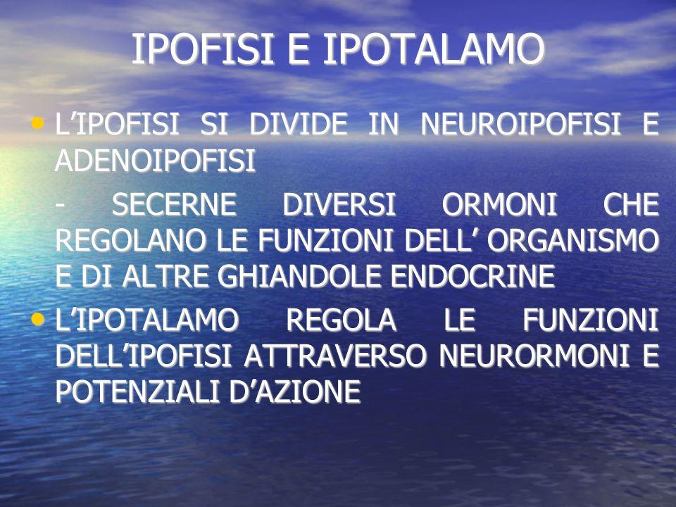 IPOFISI E IPOTALAMO L'IPOFISI SI DIVIDE IN NEUROIPOFISI E ADENOIPOFISI