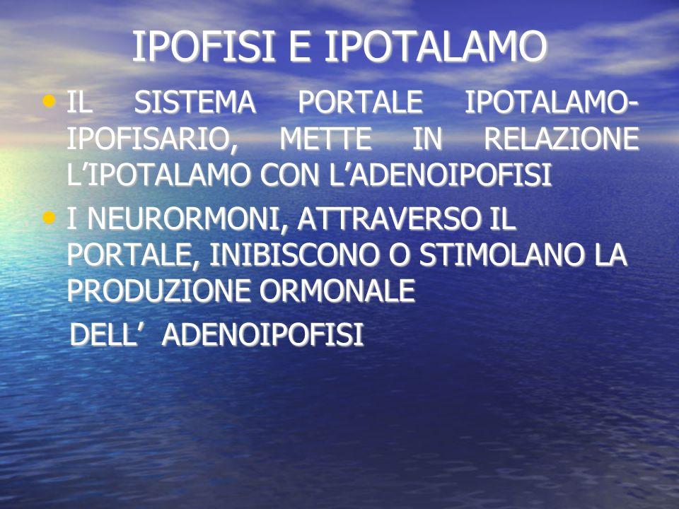 IPOFISI E IPOTALAMO IL SISTEMA PORTALE IPOTALAMO- IPOFISARIO, METTE IN RELAZIONE L'IPOTALAMO CON L'ADENOIPOFISI.