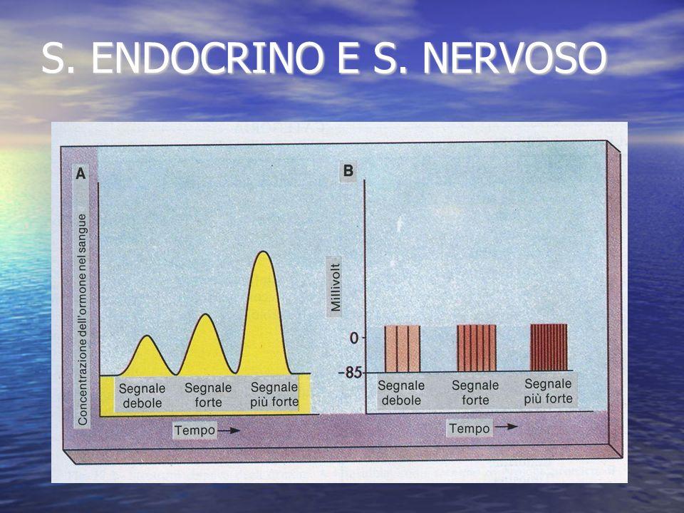 S. ENDOCRINO E S. NERVOSO