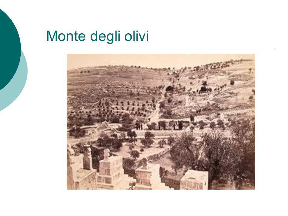 Monte degli olivi