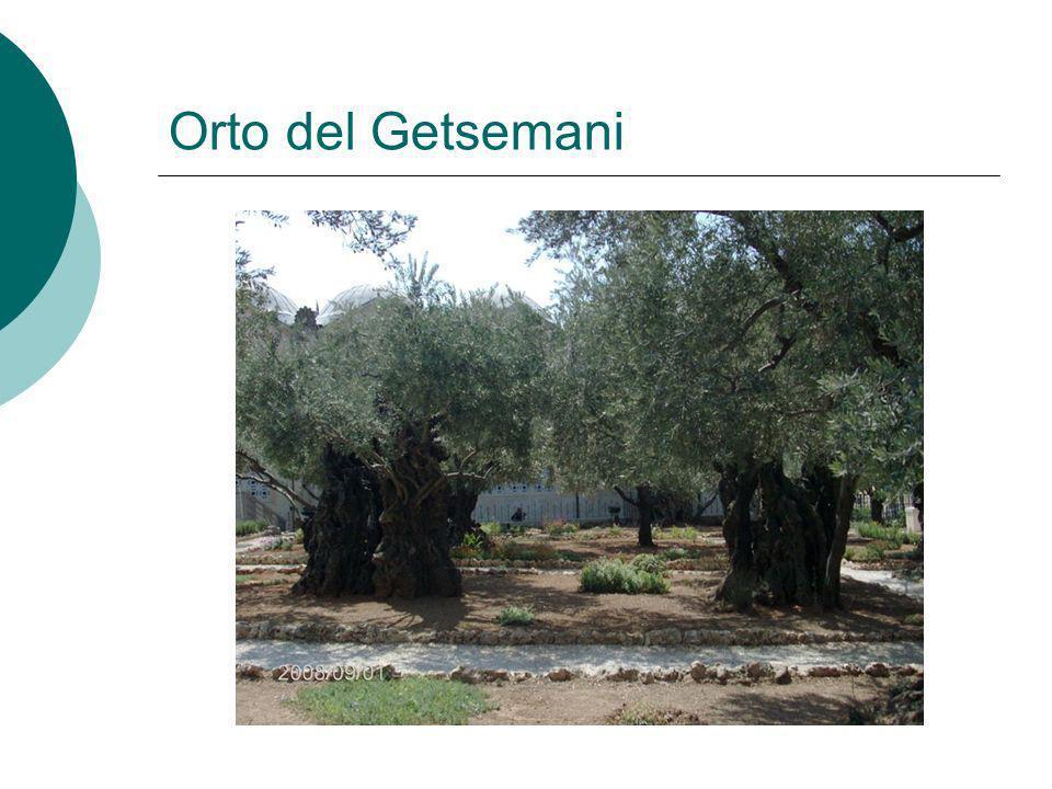 Orto del Getsemani