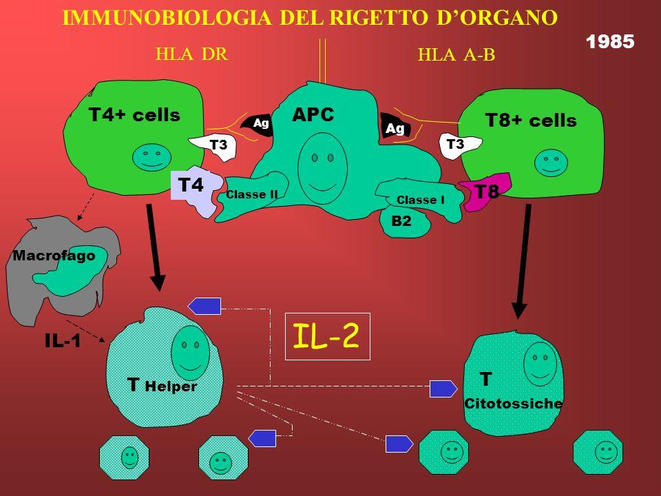 IL-2 IMMUNOBIOLOGIA DEL RIGETTO D'ORGANO 1985 HLA DR HLA A-B T4+ cells