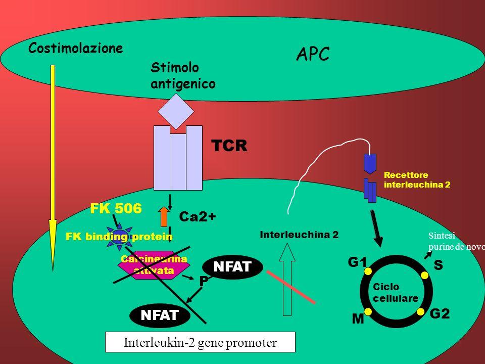 Interleukin-2 gene promoter