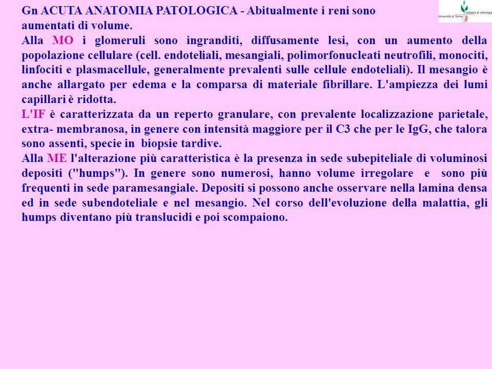 Gn ACUTA ANATOMIA PATOLOGICA - Abitualmente i reni sono