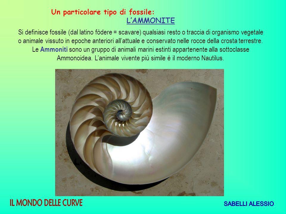 Un particolare tipo di fossile:
