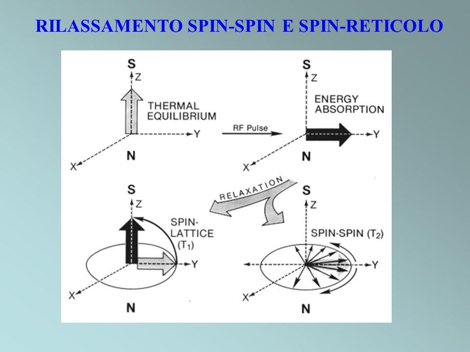 RILASSAMENTO SPIN-SPIN E SPIN-RETICOLO