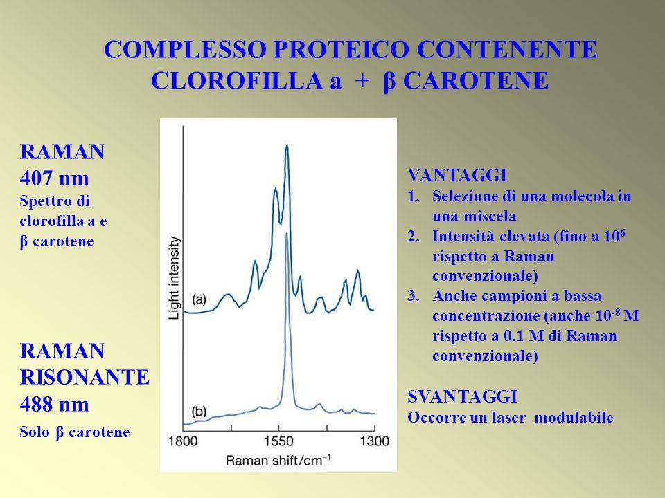 COMPLESSO PROTEICO CONTENENTE CLOROFILLA a + β CAROTENE