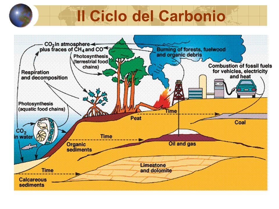Il Ciclo del Carbonio
