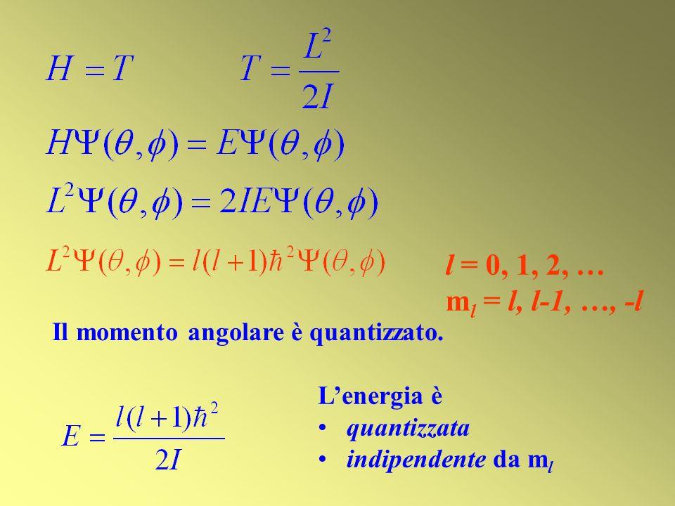 l = 0, 1, 2, … ml = l, l-1, …, -l Il momento angolare è quantizzato.