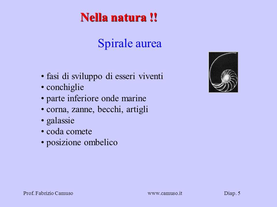 Nella natura !! Spirale aurea fasi di sviluppo di esseri viventi