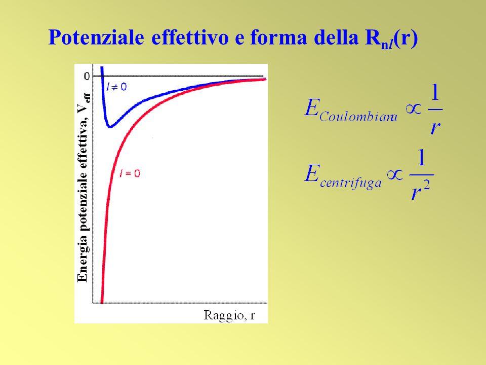 Potenziale effettivo e forma della Rnl(r)