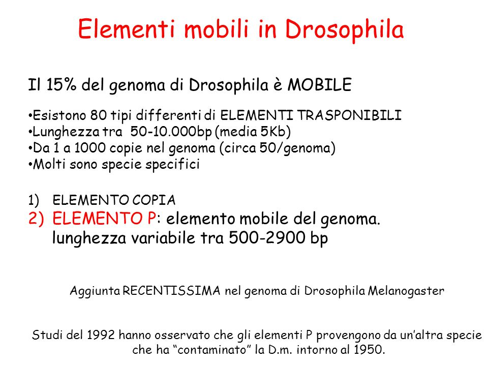 Elementi mobili in Drosophila