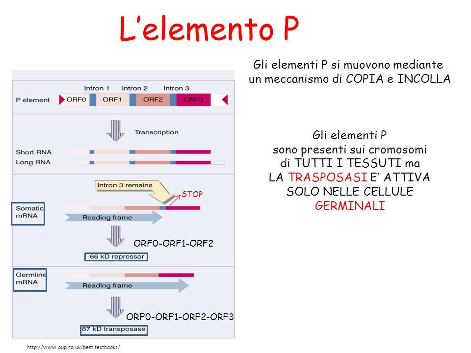 L'elemento P Gli elementi P si muovono mediante