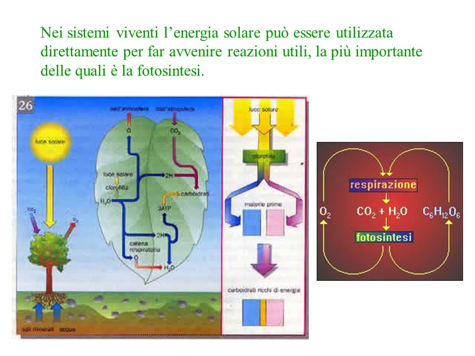 Nei sistemi viventi l'energia solare può essere utilizzata