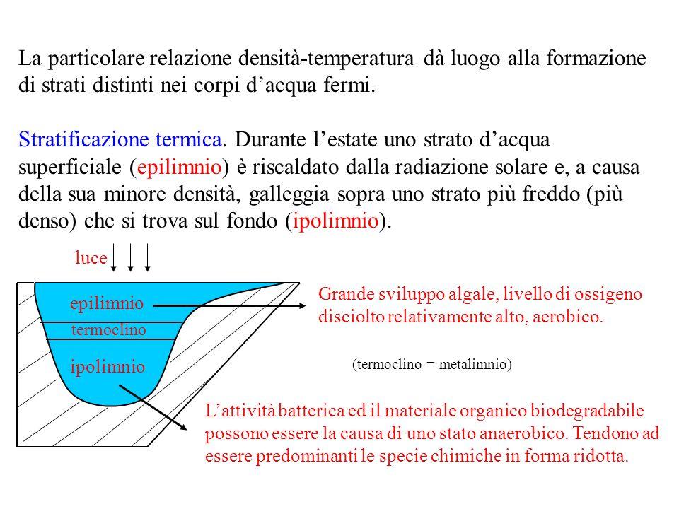 La particolare relazione densità-temperatura dà luogo alla formazione di strati distinti nei corpi d'acqua fermi.