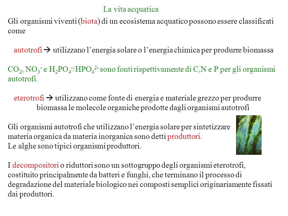 materia organica da materia inorganica sono detti produttori.