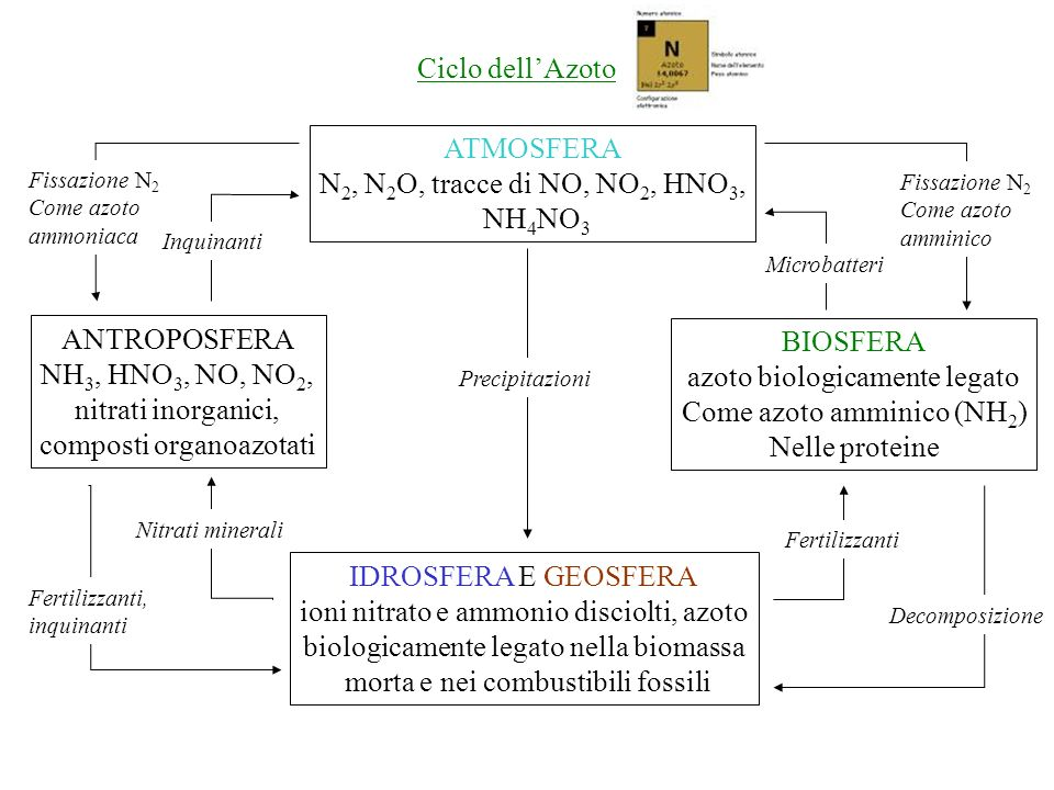 composti organoazotati BIOSFERA azoto biologicamente legato