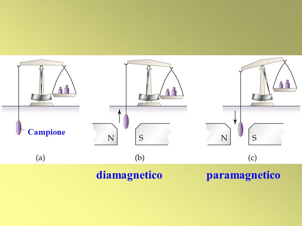 Campione diamagnetico paramagnetico