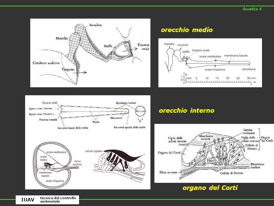 orecchio medio orecchio interno organo del Corti IUAV Acustica 4