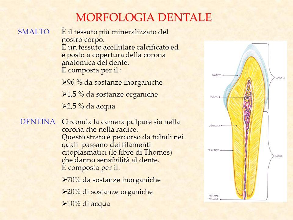 MORFOLOGIA DENTALE SMALTO