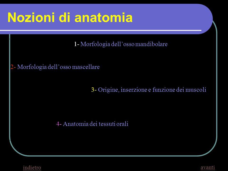 Nozioni di anatomia 1- Morfologia dell'osso mandibolare