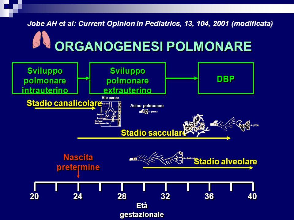 Sviluppo polmonare intrauterino Sviluppo polmonare extrauterino