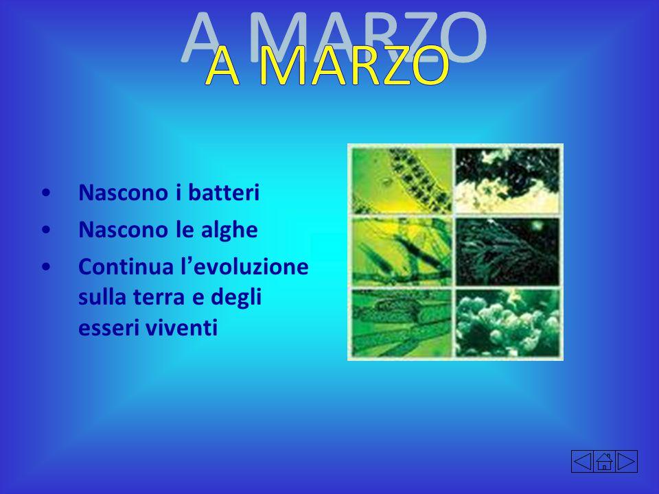 A MARZO Nascono i batteri Nascono le alghe
