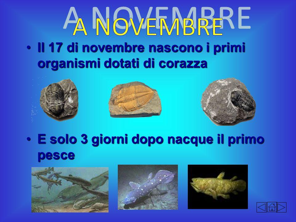 A NOVEMBRE Il 17 di novembre nascono i primi organismi dotati di corazza.