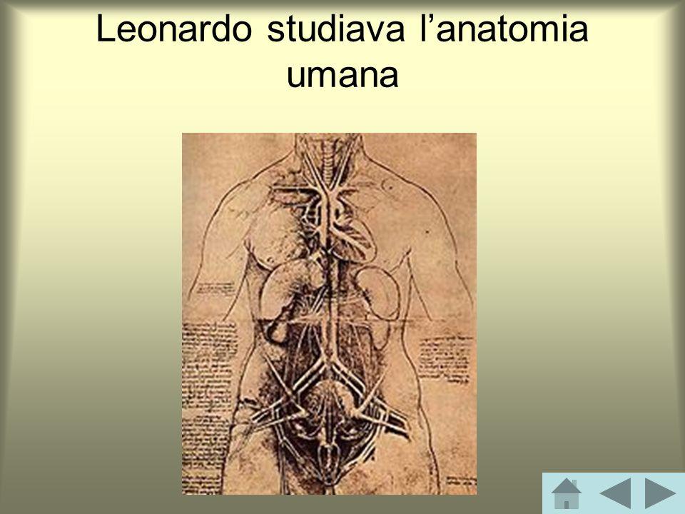 Leonardo studiava l'anatomia umana