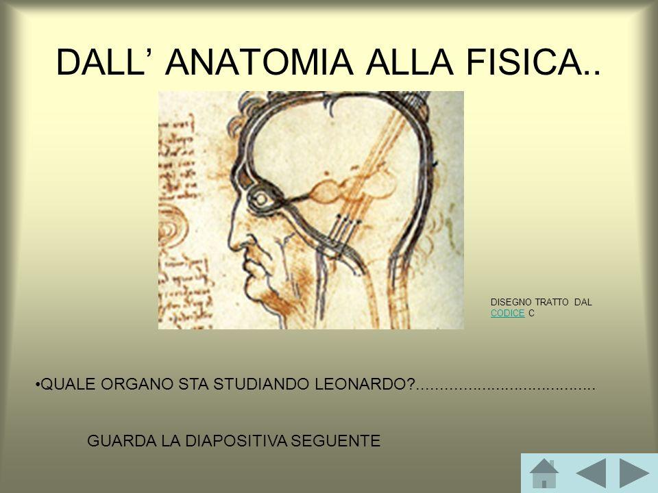 DALL' ANATOMIA ALLA FISICA..