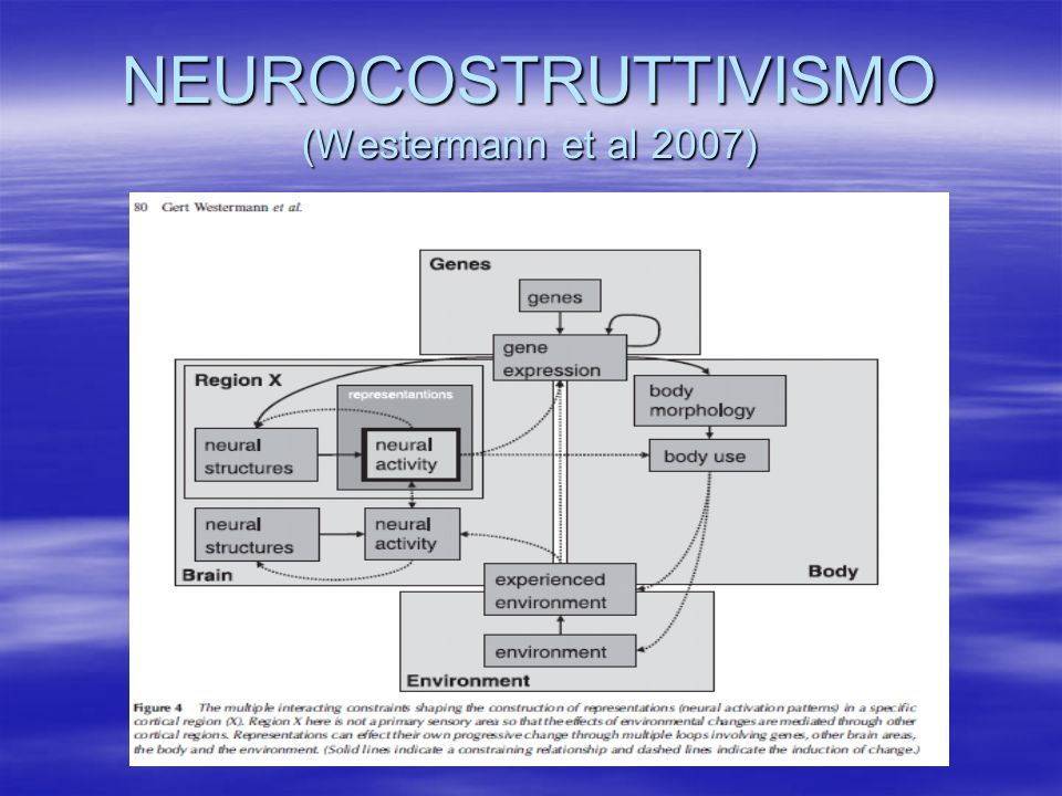 NEUROCOSTRUTTIVISMO (Westermann et al 2007)