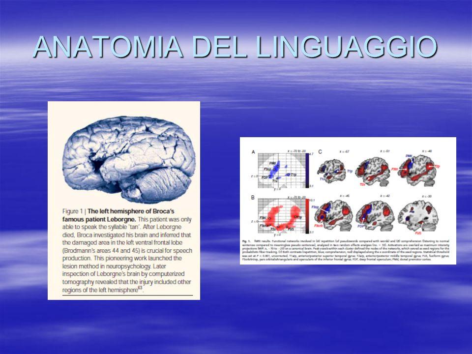 ANATOMIA DEL LINGUAGGIO