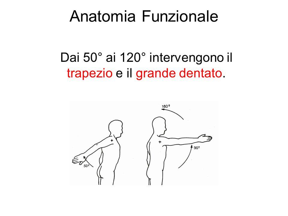 Dai 50° ai 120° intervengono il trapezio e il grande dentato.
