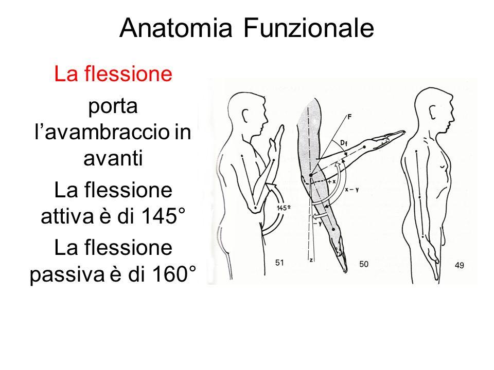 Anatomia Funzionale La flessione porta l'avambraccio in avanti