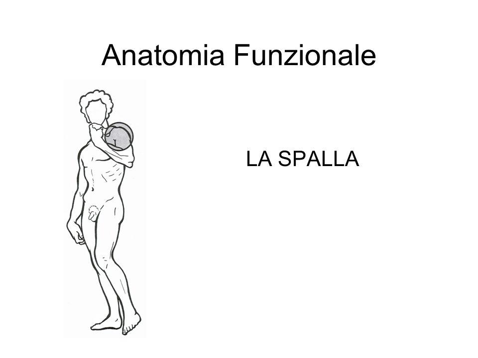 Anatomia Funzionale LA SPALLA